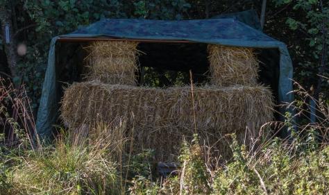 straw-bale-blind-0416