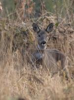 mummy-deer-2823