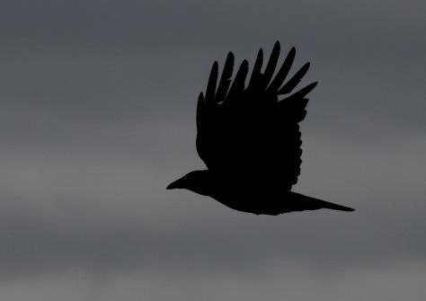 crow silo-5687.jpg