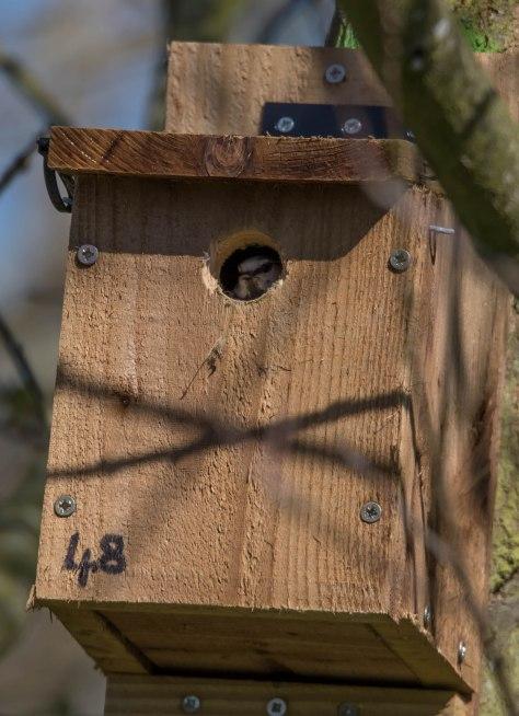 tit box-3369