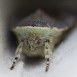 Close up (1 of 1)