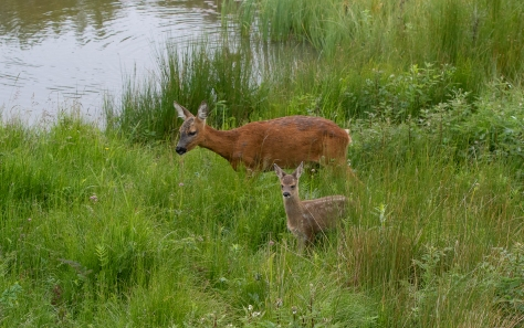mum and single by woggle water-9083