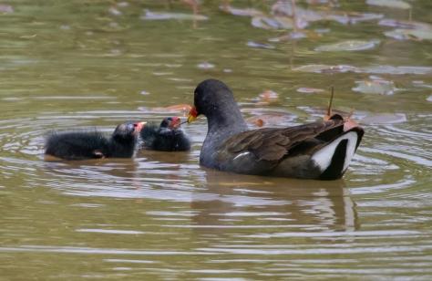 pairs feeding-9211